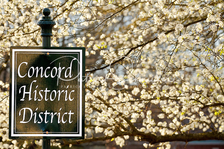Photography of downtown Concord, NC, the largest city in Cabarrus County. The bradford pear trees are in full bloom along South Union Street. Photo is part of a photographic series of images featuring Concord, NC, by Charlotte-based photographer Patrick Schneider..