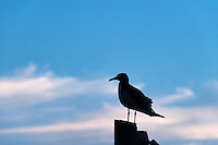 Seagull perched on pier.