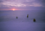 Three polar bears laying and sitting on the ice at sunset at Hudson Bay, Churchill, Manitoba, Canada.