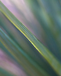 Close up of yucca leaf