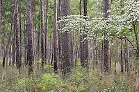 ,  Big Thicket National Preserve, East Texas, USA