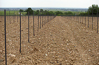 Newly planted vineyard. Chateau de la Soucherie, anjou, Loire, France