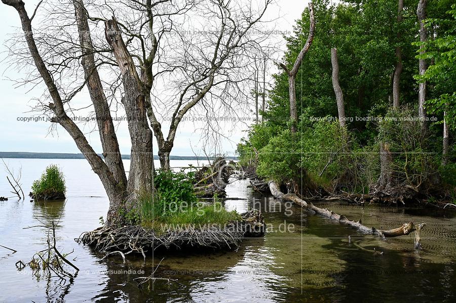 GERMANY, Plau, lake and forest / DEUTSCHLAND, Plau, See und Wald, Erlen am Ufer