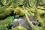 Temperate rainforest bog, The Brothers, Tongass National Forest, Alaska
