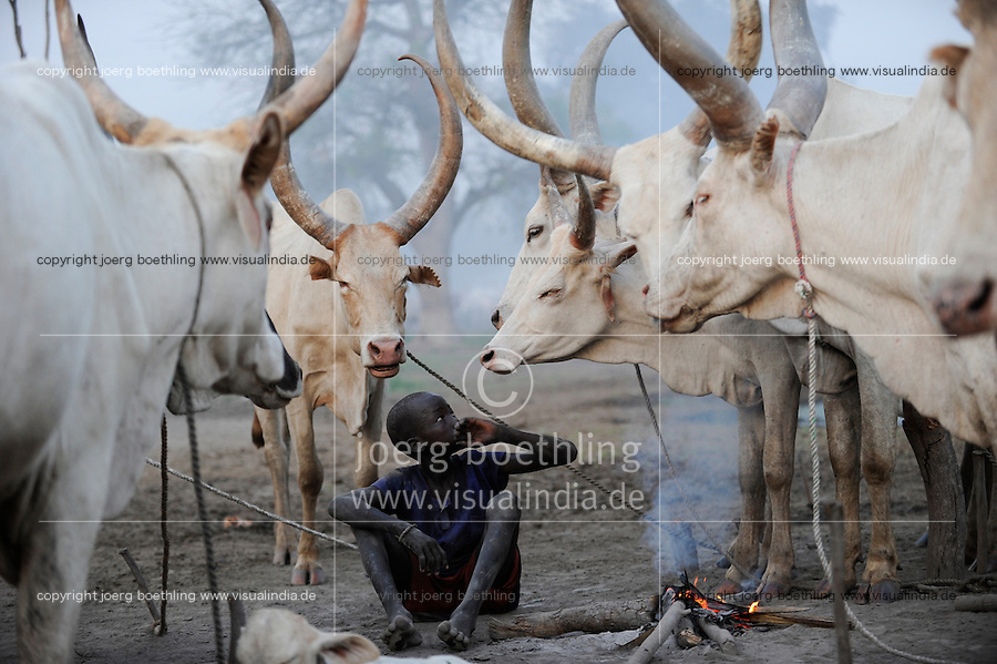 Afrika SUED-SUDAN  Bahr el Ghazal region , Lakes State, Dinka Hirten mit Zeburindern im cattle camp  / Africa SOUTH SUDAN  Bahr al Ghazal region , Lakes State, Dinka shepherd with Zebu cow in cattle camp