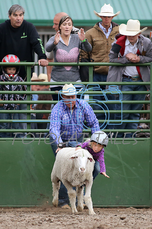 Savannah Meznarich, 3, competes in the mutton busting event at the Smackdown at Fuji Park in Carson City, Nev., on Friday, June 5, 2015. <br /> Photo by Cathleen Allison/Nevada Photo Source