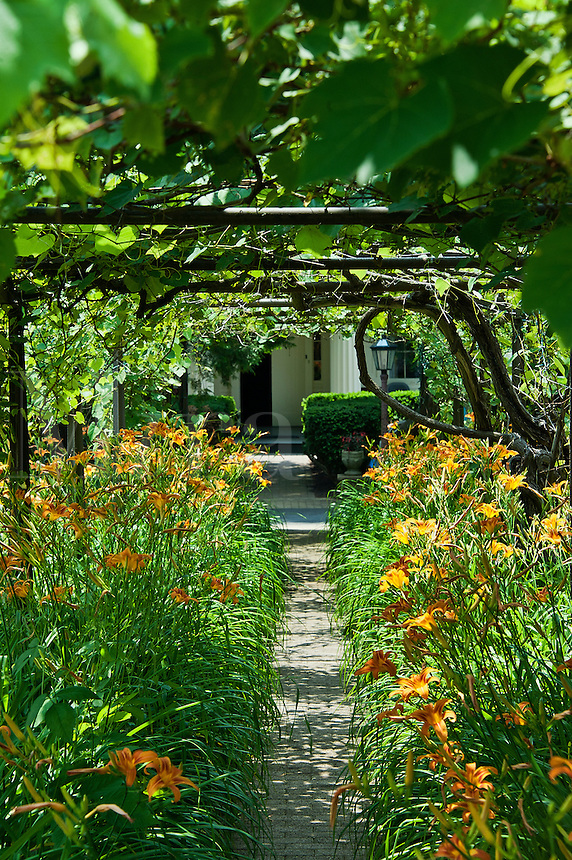Arbor and daylilly path.