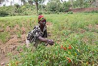 Mafinda, Agriculture