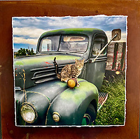 Feline Ford - Mixed Media - Montana<br />