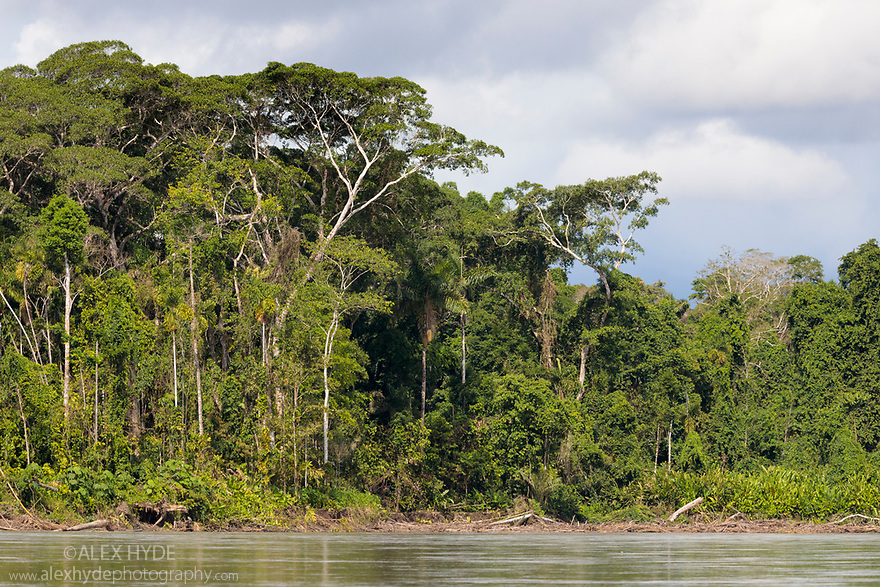Lowland rainforest along the banks of the Madre de Dios River, Manu Biosphere Reserve, Amazonia, Peru.