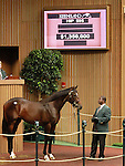 September 11, 2014: Hip #595 Tour De Force  Tiznow - Dream Supreme colt consigned by Lane's End, sold for $1,350,000 at the Keeneland September Yearling Sale.   Candice Chavez/ESW/CSM