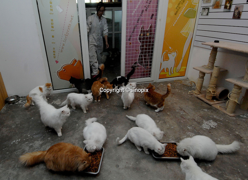 A worker at the Lucky Cat Rescue Center in Beijing, China.  Cats are being abandoned in large numbers and are ending up in Government compounds where they slowly die. The Center tries to save the cats and find homes for them so they do end up in Government compounds.