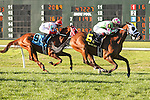NEW ORLEANS, LA - FEBRUARY 25: Enterprising #6, ridden by Julien Laparoux, wins the Fair Grounds Handicap. on Risen Star Stakes Day at Fair Grounds Race Course on February 25, 2017 in New Orleans, Louisiana. (Photo by Jarrod Monaret/Eclipse Sportswire/Getty Images)