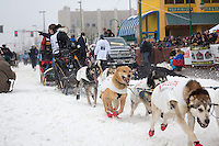 Cindy Abbott and team leave the ceremonial start line at 4th Avenue and D street in downtown Anchorage during the 2013 Iditarod race. Photo by Jim R. Kohl/IditarodPhotos.com