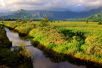 Kawainui Marsh and stream, protected habitat and hiking trail, Kailua, Oahu
