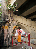 Worshippers performs Hindu ritual in a small shrine within a tree under an expressaway in Bangalore, Karnataka, India