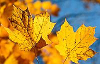 Fall in Missouri.