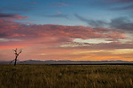 Sunrise in New England countryside about 4-5 hours north-west of Sydney in Australia. This view is not far from the town of Quirindi.