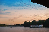 The famous Sunset Bat Watching excursion is a must see when visiting Austin each evening around sunset the Congress Avenue bats emerge like a black cloud from the crevices of the bridge. Covering the countryside in search of food, it is estimated that the bats consume from 10,000 to 30,000 pounds of insects.
