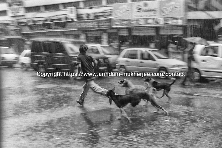 A boy and street dogs play during a rain in Kolkata, India.