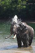 Carl, ANIMALS, wildlife, photos, elephant in water(SWLA3076,#A#)