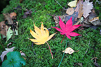 Autumn Leaves at Goit Stock in Yorkshire, United Kingdom