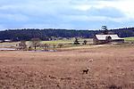 Family farms are throughout the central valley of San Juan Island, Washington.   San Juan Islands group, Salish Sea, Washington State, USA