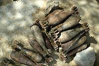 - war material seized by Italian soldiers, mortar grenades....- materiale bellico sequestrato dai militari italiani, proiettili da mortaio..