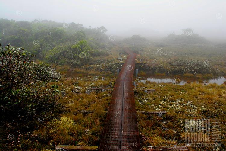 Kilohana Trail board walk.  A wonderful boardwalk that winds through Kauai's bogs to the Kilohana Overlook