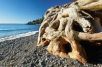 Driftwood on pebble beach, Deadman Bay Preserve, San Juan County Land Bank, San Juan Island, San Juan County, Washington, USA