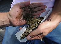 """MEDELLIN- COLOMBIA-04-05-2014. Los amantes del cannabis celebraron el Día Internacional de la Marihuana, o """"Día 420"""" en alusión a la cifra que identifica a los consumidores de esta droga, con fiestas, descuentos en dispensarios legales y actos por la legalización./ The Cannabis lover celebrate the Marihuana International Day or """"420 Day"""" to mention the number of cannabis consumers, they celebrate with parties, saves in legal dispensary adn legalization acts. Photo: VizzorImage/ Luis Rios"""
