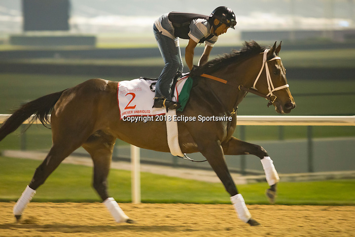 DUBAI,UNITED ARAB EMIRATES-MARCH 29: Forever Unbridled,trained by Dallas Stewart,exercises in preparation for the Dubai World Cup at Meydan Racecourse on March 29,2018 in Dubai,United Arab Emirates (Photo by Kaz Ishida/Eclipse Sportswire/Getty Images)