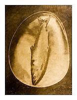Print over gold leaf or silver leaf