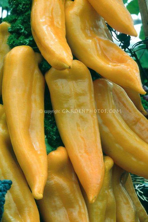 Pepper 'Long Yellow Ringo' cubanelle