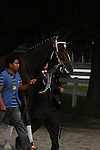 Rachel Alexandra walks over to the paddock for the Mother Goose Stakes at Belmont Park, Elmont, NY 06.27.2009
