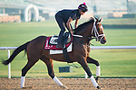 DUBAI,UNITED ARAB EMIRATES-MARCH 30: Run Time,trained by Michael Naker,exercises in preparation for the Dubai Gold Cup at Meydan Racecourse on March 30,2018 in Dubai,United Arab Emirates (Photo by Kaz Ishida/Eclipse Sportswire/Getty Images)
