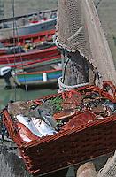 Europe/France/Pays de la Loire/85/Vendée/Ile de Noirmoutier: Le port - Retour de la pêche - Paniers de poissons et de fruits de mer