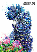 Carlie, REALISTIC ANIMALS, REALISTISCHE TIERE, ANIMALES REALISTICOS, paintings+++++Black-Cockatoo,AUED04,#A#, EVERYDAY ,australian wildlife