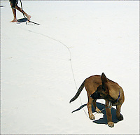 """On the leash<br /> From """"Color Blind"""" series. Miami, 2010"""