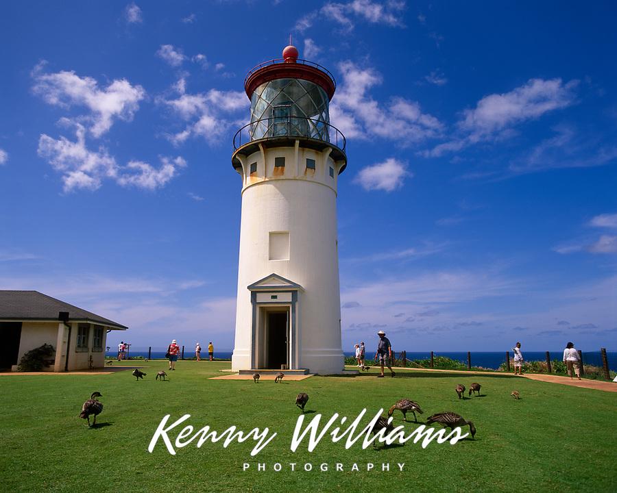 Kilauea Lighthouse & Hawaiian Nene Geese, Kauai, Hawaii, USA.