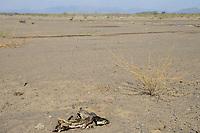 KENYA, Turkana, drought / KENIA, Turkana, Kakuma, Duerre