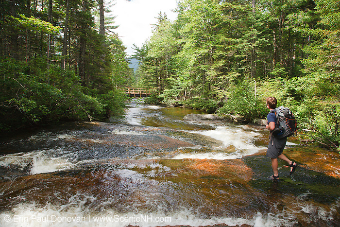 Hiker exploring Meadow Brook during the summer months in Livermore, New Hampshire USA. Much of this area was logged during the Sawyer River Logging Railroad era, which operated from 1877 - 1928.