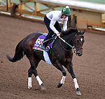 ARCADIA, CA - OCT 31: Celestine, owned by Phaedrus Flights LLC and trained by William I. Mott, exercises in preparation for the Breeders' Cup Turf Sprint at Santa Anita Park on October 31, 2016 in Arcadia, California. (Photo by Scott Serio/Eclipse Sportswire/Breeders Cup)
