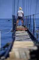 Europe/Italie/Calabre/Baganara : Pêche à l'espadon sur le Nuova Carmela avec Giuseppe Patamia le patron