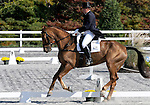 17 October 2008:  Rider Bruce Davidson Jr. and My Boy Bobby are in 8th-place after the dressage section of the Fair Hill International CCI*** Championship at Fair Hill Equestrian Center in Fair Hill, Maryland.  Dressage is the first stage of the three-day event.