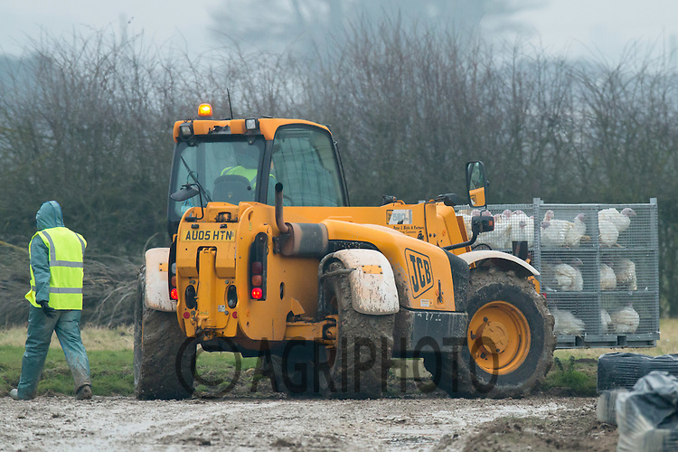 Defra officials dealing with an outbreak of H5N8 Bird Flu near Boston Lincolnshire <br /> Picture Tim Scrivener 07850 303986<br /> tim@agriphoto.com<br /> ….covering agriculture in the UK….