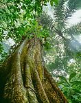 Smithsonian Tropical Research Institute, Barro Colorado, Panama