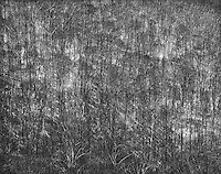"""""""Trees and Sunlight"""" <br /> Great Smoky Mountains National Park, North Carolina<br /> <br /> The sun was bright one winter day and plenty of light passed through leafless trees to reach the bare ground. Wavy patterns were apparent in both the dark trees and the bright sunlight on the ground. To differentiate the two types of patterns, I expanded image contrast substantially by increasing film development time and then increasing contrast more during image editing. The result was patterns that are quite strong in a black and white photo."""