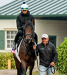 January 23, 2020: Sacred Life heads to the track as horses prepare for the Pegasus World Cup Invitational at Gulfstream Park Race Track in Hallandale Beach, Florida. Scott Serio/Eclipse Sportswire/CSM