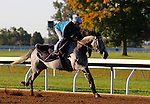 October 20, 2015:  Mutatis Mutandis (IRE) worked for trainer Ed Walker in preparation for the Breeder's Cup Filly & Mare Turf.  Candice Chavez/ESW/CSM